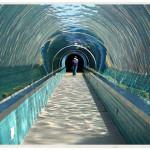 0179-Sea-Lion-Tunnel-David-Cundy-web