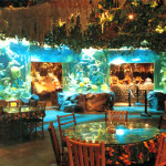Rainforest Cafe_145