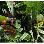 lorikeet-in-plant