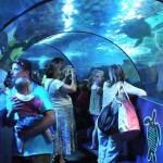 sealife-tunnel
